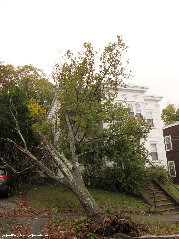 tree fell on my house