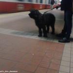 Subway Stories: South Station Last Night #MBTA