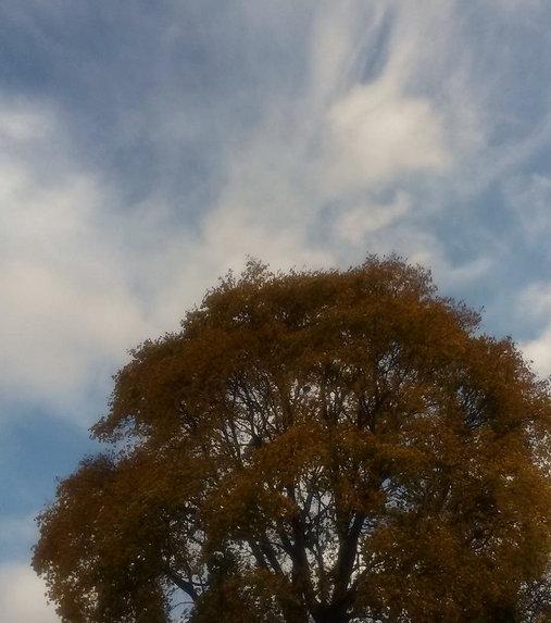 tree + blue clouded sky