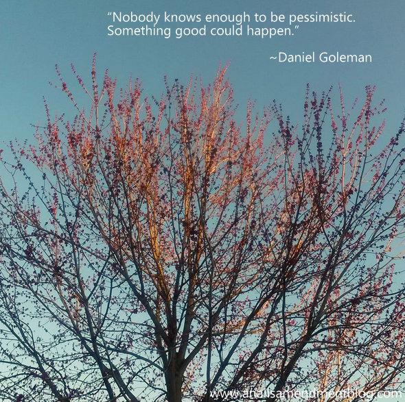 Daniel Goleman quote on optimism