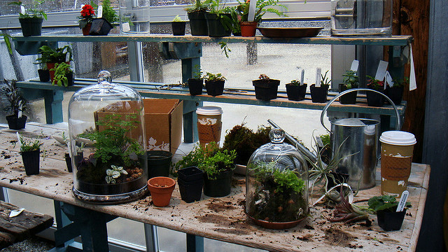 Many terrariums and plants on a table for workshop.