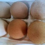 Farm Fresh Eggs ~ Life List #49