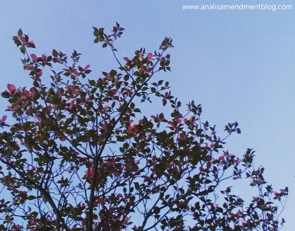 flowers blooming on tree