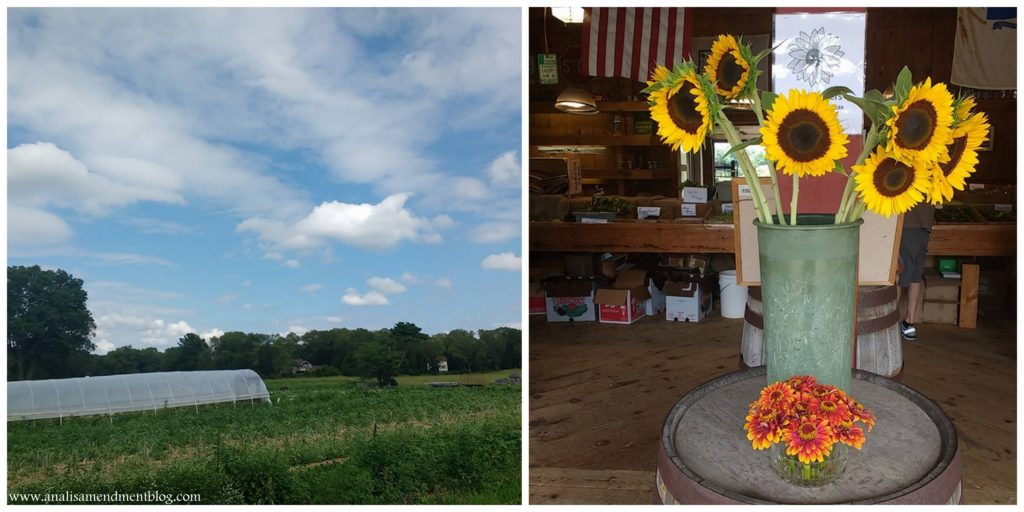Picture of the farm and picture of sunflowers in container.