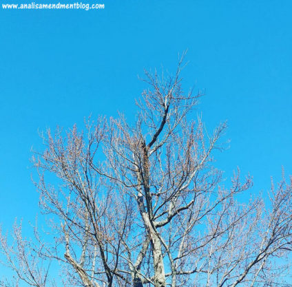 A color image showing the blus sky and top of tree starting to bud, like tree pose, representing free yoga classes in Boston.
