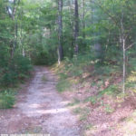 News Antidote ~ A Hike In The Woods