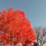 Sleep as Self-Care + Changing Seasons