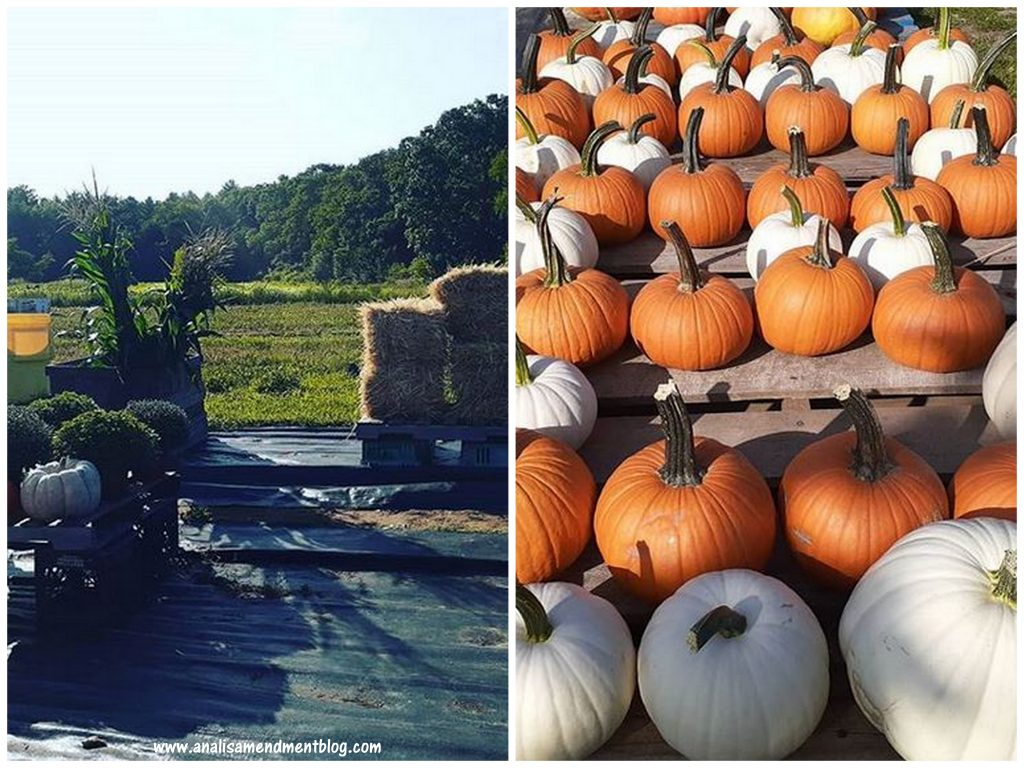 New England scene showing pumpkins and a field with haystacks