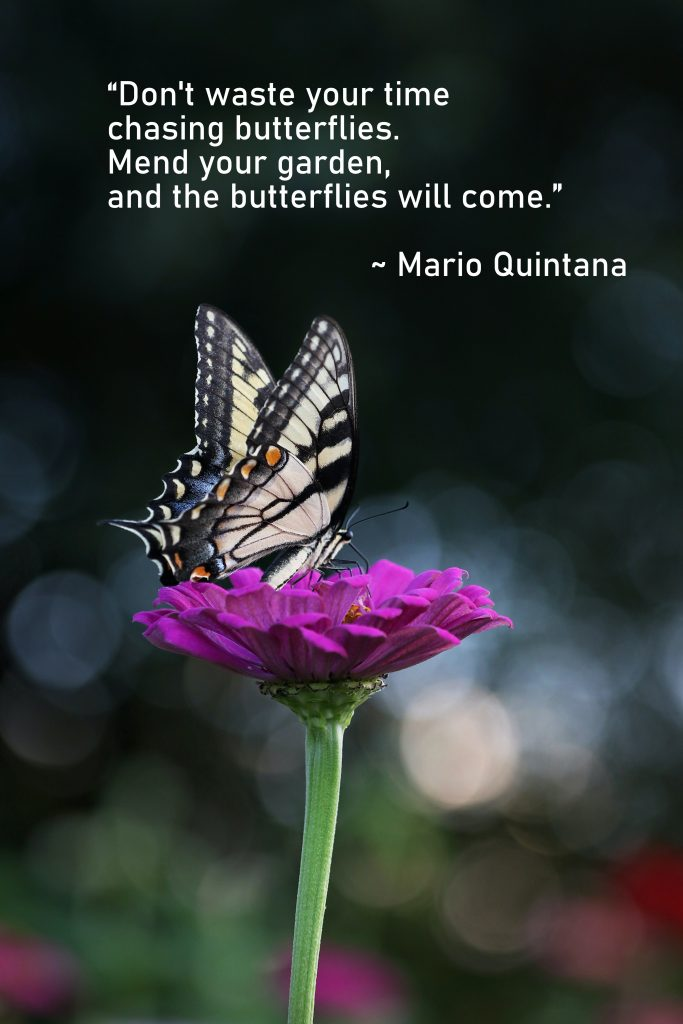 Quote about butterflies