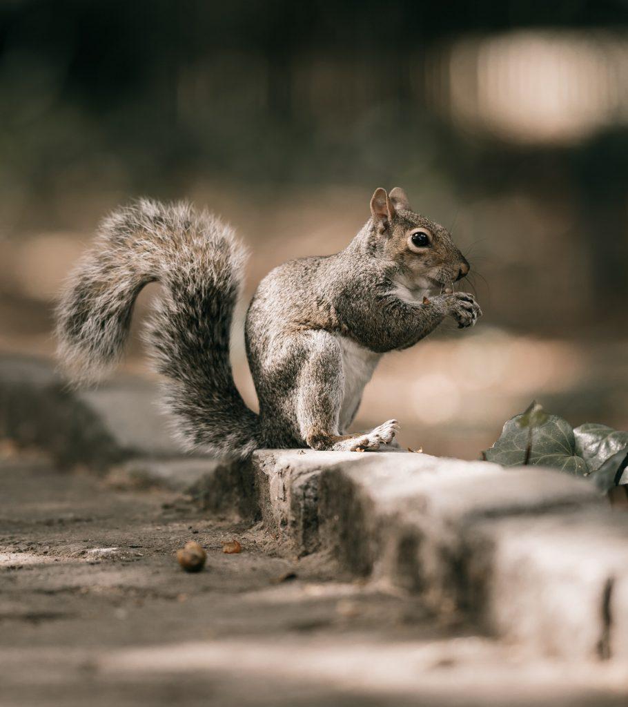 squrirel and acorn season