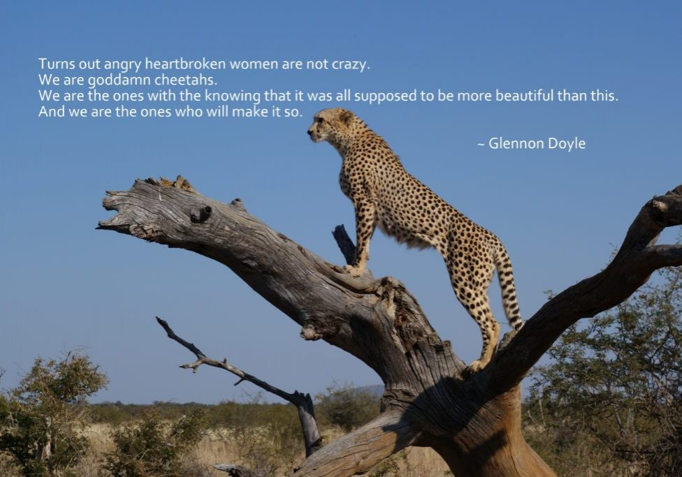 Cheetah Quote Glennon Doyle
